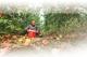 因降雨受灾,5万公斤桃子滞销,愁坏残疾桃农——让我们献出一份爱心,帮帮他!