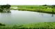 齐河建成160个村庄稳定塘 | 10万余人受益
