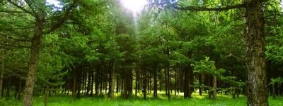 喜讯!我市2乡镇25个村入选省级森林乡镇和森林村居|分获50万元和5万元奖励