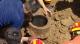 视频丨揪心!齐河2岁幼童掉进7米深机井,历时2小时成功营救