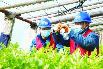 辛寨供电所 服务下沉接地气  安全送电到农家