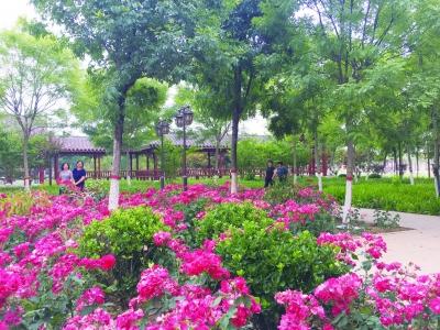 突出红色主题  提升休闲体验 | 乐陵:打造宜居宜游公园城市