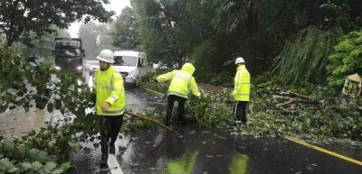 清理倒伏树200余株|德州公路系统迎战台风,确保干线公路安全畅通